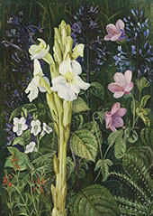 Cape Colours By Marianne North