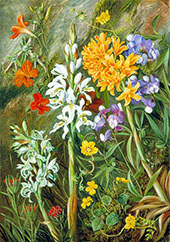 Chilean Ground Orchids and Other Flowers 1880 By Marianne North