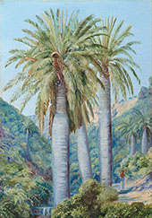 Chilean Palms in The Valley of Salto 1880 By Marianne North