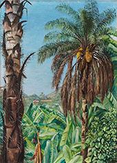 Cocoera Palms and Bananas Morro Velho Brazil 1880 By Marianne North