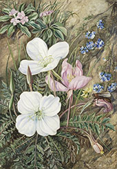 Common Flowers of Chili By Marianne North