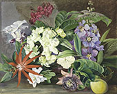 Cultivated Flowers Painted in Jamaica By Marianne North