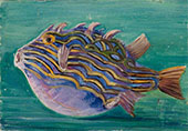 Exotic Fish 1880 By Marianne North