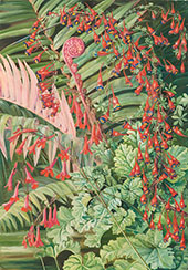 Fern and Flowers Bordering The River at Chanleon Chili 1885 By Marianne North