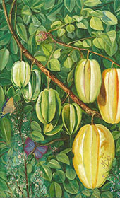 Flowers and Fruit of Carambola and Butterflies Singapore By Marianne North