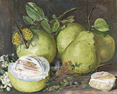 Flowers and Fruit of The Pomelo a Branch of Hennah and Flying Lizard Sarawak By Marianne North