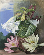 Flowers Cultivated in The Botanic Garden Rio Janeiro Brazil By Marianne North