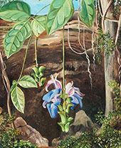 Flowers of a Twiner Brazil 1880 By Marianne North