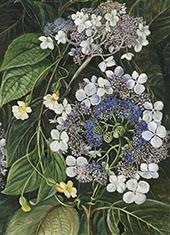 Flowers of Darjeeling India By Marianne North