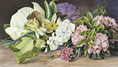 Flowers of North American Trees and Shrubs By Marianne North