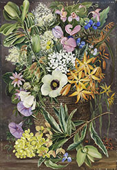 Flowers of st Johns in Pondo Basket By Marianne North