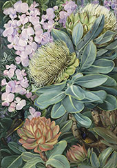 Flowers of The Wagenboom and a Podalyria and Honeysuckers By Marianne North