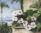 Foliage and Flowers of a Climbing Plant with Royal Palms and Sugarloaf Mountain in The Background Brazil By Marianne North