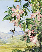 Foliage and Flowers of a Coral Tree and Double Crested Humming Birds Brazil By Marianne North