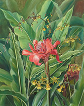 Foliage and Flowers of a Madagascar Plant 1880 By Marianne North