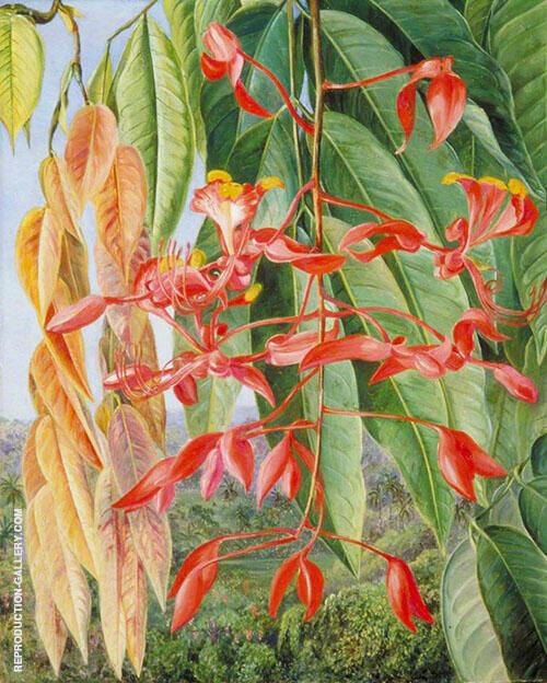 Foliage and Flowers of The Burmese Thaw Ka or Soka 1876 By Marianne North