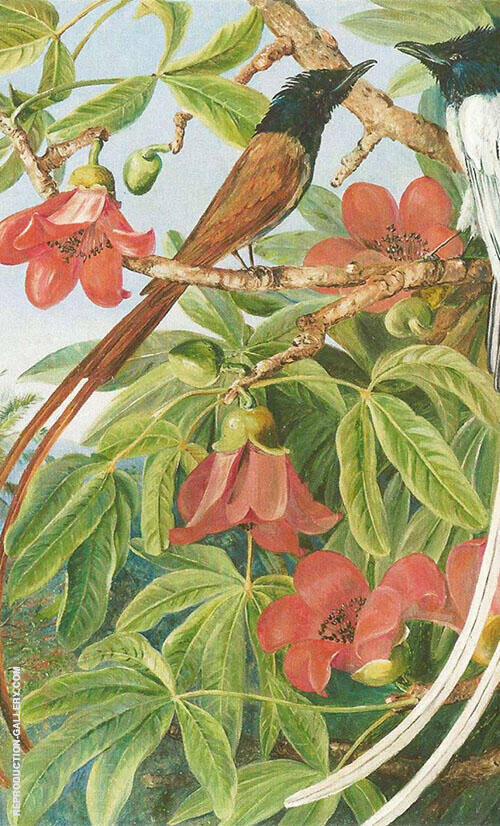 Foliage and Flowers of The Red Cotton Tree and a pair of Long Tailed Fly Catchers Ceylon By Marianne North