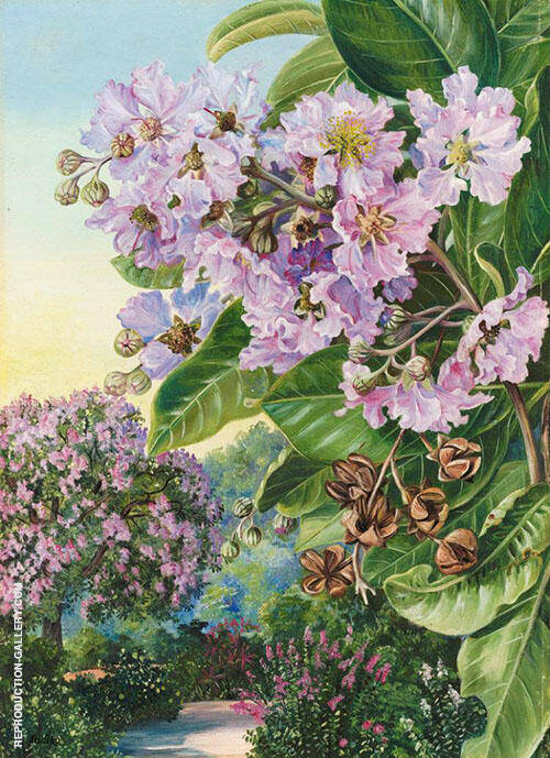 Foliage Flowers and Fruit of a Forest Tree of India By Marianne North
