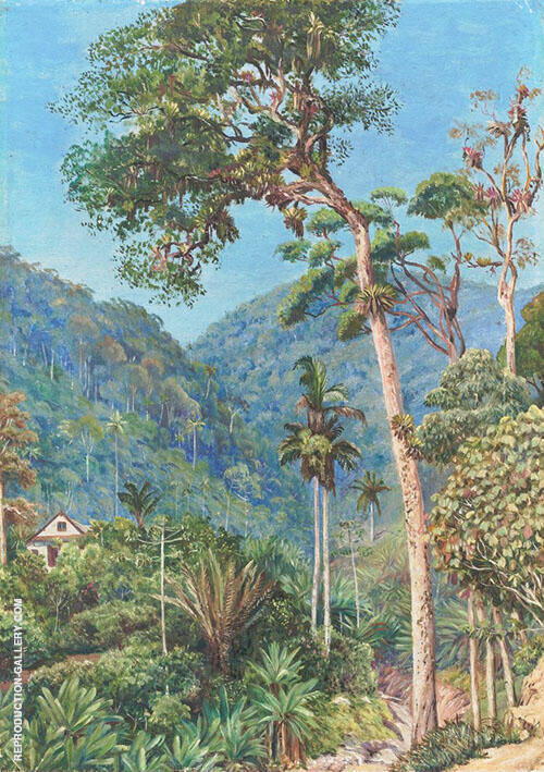 Glimpse of mr Weilhorns House at Petropolis Brazil 1880 By Marianne North