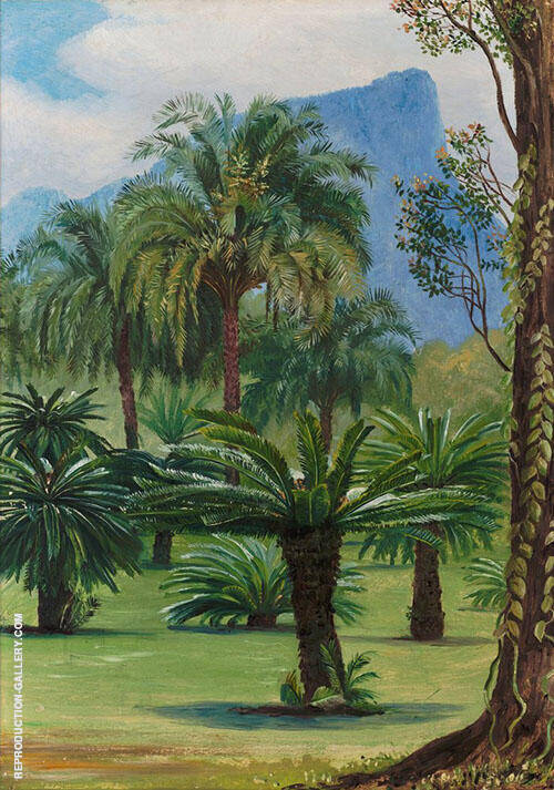 Group of Sago Yielding Cycads in The Botanic Garden at Rio Janeiro 1880 By Marianne North