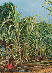 Harvesting The Sugar Cane in Minas Geraes Brazil 1880 By Marianne North