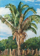Indian Palm at Sette Lagoa Brazil 1880 By Marianne North