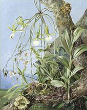Jamaica Orchids Growing on a Branch of The Calabash Tree By Marianne North