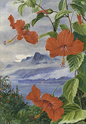 Mandrinette and Mountain Home of The Pitcher Plant in The Distance By Marianne North