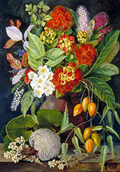 New Zealand Flowers and Fruit By Marianne North