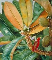 Northia Hornei Foliage Flowers and Fruit of The Capucin Tree of The Seychelles By Marianne North