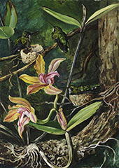 Orchid and Humming Birds Brazil By Marianne North