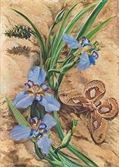 Palma de Santa Rita and Atlas Moth Brazil 1880 By Marianne North