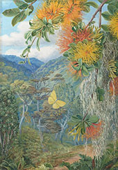 Parasites on Beech Trees Chili 1880 By Marianne North