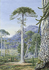 Puzzle Monkey Trees and Guanacos Chili By Marianne North