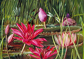 Red Water Lily of Southern India 1878 By Marianne North