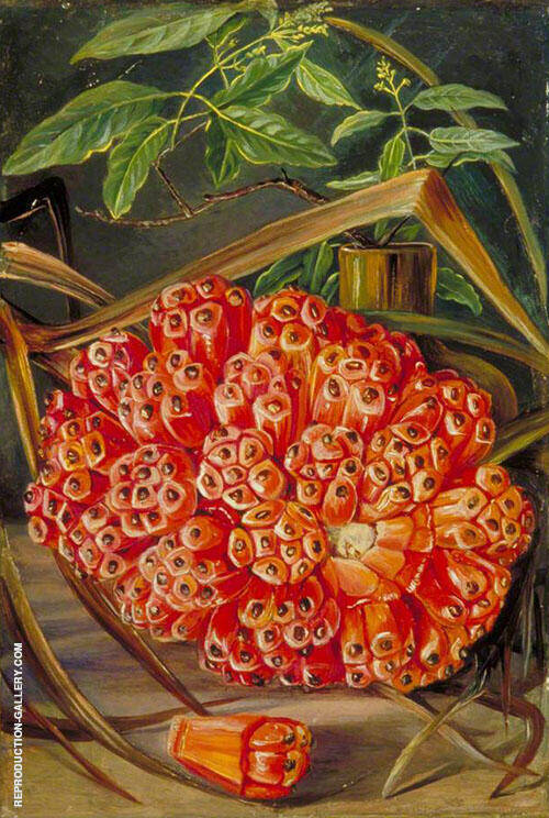 Ripe Fruit of a Screw Pine and a Sprig of Sandal Wood 1870 By Marianne North