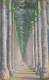 Royal Palm Avenue 1872 By Marianne North