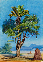 Scotchman Hugging a Creole Brazil 1880 By Marianne North