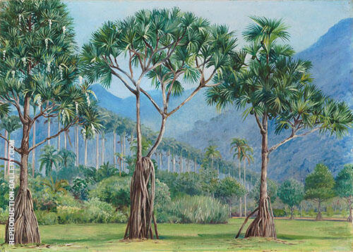 Screw Pines and Avenue of Royal Palms in The Botanic Gardens Rio 1880 By Marianne North