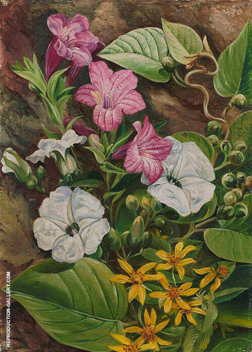Some Brazilian Flowers 1880 By Marianne North