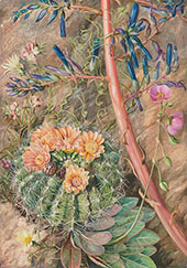 Some Flowers of The Sterile Region of Cauquenas Chili 1880 By Marianne North