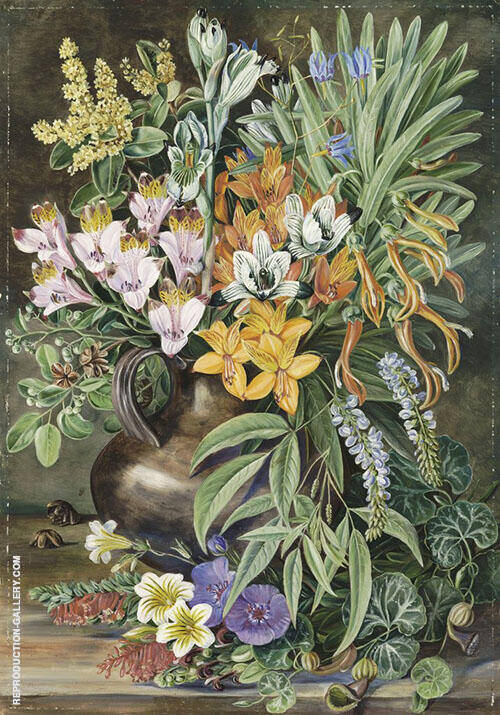Some Wild Flowers of Quilpue Chili By Marianne North
