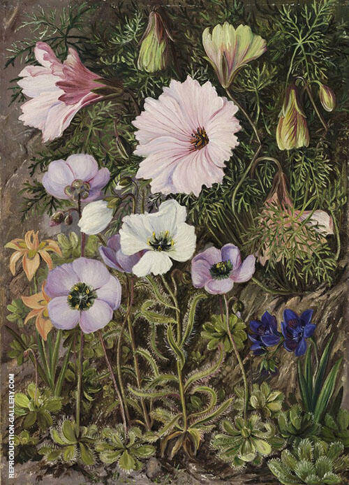 South African Sundews and Other Flowers By Marianne North