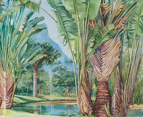 Study of The Travellers Tree of Madagascar in The Botanic Garden of Rio 1880 By Marianne North