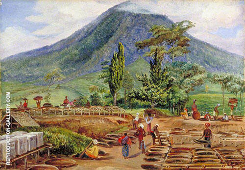 Tea Drying in Mr Holles Establishment Java 1876 Painting By Marianne North