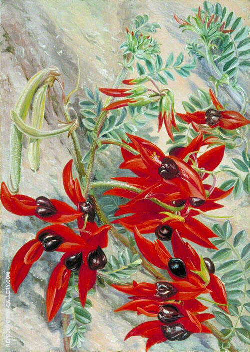 The Australian Parrot Flower 1880 By Marianne North