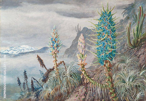 The Blue Puya and Cactus at Home in The Cordilleras Near Apoquindo Chili 1880 By Marianne North