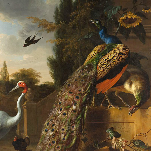 Oil Painting Reproductions of Melchior De Hondecoeter