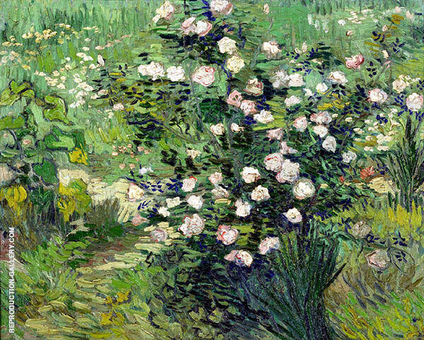Rosebush in Bloom 1900 By Vincent van Gogh
