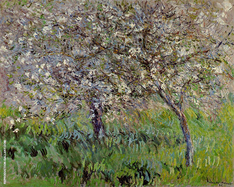 Apple Trees in Bloom at Giverny c1900 By Claude Monet